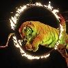 Цирки в Калинино