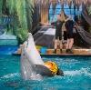 Дельфинарии, океанариумы в Калинино