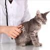 Ветеринарные клиники в Калинино